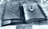 Artiste : DONNADIEU Rémy  /  Titre : A l'ouest d'octobre - A livre ouvert